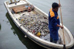 Vụ cá chết tại hồ Văn Chương, quận Đống Đa: Nguyên nhân từ sự thay đổi thời tiết
