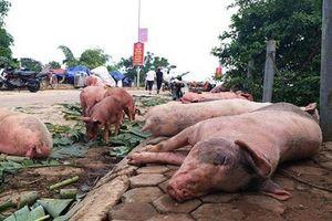 Nghệ An không 'đủ sức' cấp đông thịt lợn sạch