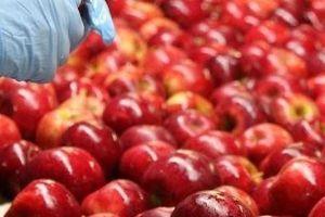 Khám phá quy trình sản xuất và đóng gói táo ở nước ngoài