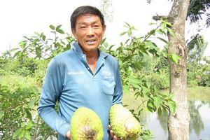 Cần Thơ: Tỷ phú đêm đi thụ phấn mãng cầu xiêm, bán hơn 200 tấn trái/năm
