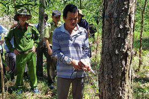 Lâm Đồng: Truy bắt kẻ chủ mưu vụ đầu độc rừng thông
