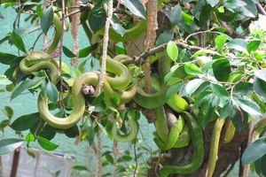Bảo tàng rắn đầu tiên ở Việt Nam nằm tại tỉnh nào?