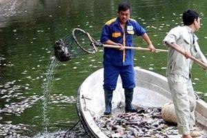 Cá chết hàng loạt nổi trắng hồ Văn Chương