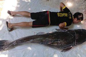 Bắt được cá lăng nặng 77 kg trên sông Sêrêpốk