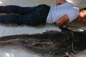 Cá 'khủng' to ngang người lớn dính câu cần thủ ở Đắk Lắk