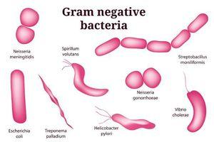 Phát triển hợp chất tiêu diệt vi khuẩn gram âm E.coli