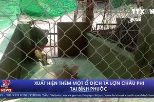 Xuất hiện thêm một ổ dịch tả lợn châu phi tại Bình Phước