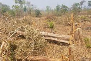 Cần xử lý nghiêm những vụ phá rừng phòng hộ ở Gia Lai