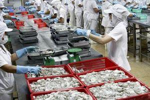 Xuất khẩu mực, bạch tuộc sang thị trường Hàn Quốc tăng trưởng mạnh