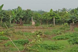Hưng Yên: Kẻ gian chặt phá 3 sào cây ăn quả của người dân, Công an vào cuộc điều tra