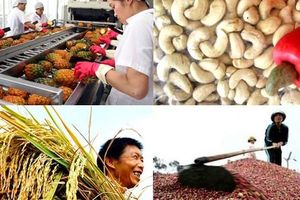 Nhiều mặt hàng nông sản xuất khẩu tăng trưởng âm hai con số