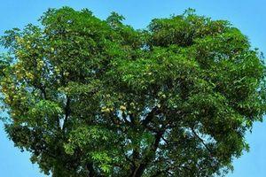Hóa ra đây là loại cây mà dân mạng đang kêu gọi checkin gấp vì có hình quá giống trái tim tình yêu