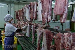 Kiểm soát chặt hoạt động các cơ sở giết mổ để phòng dịch tả lợn châu Phi