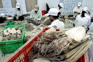 Người Hàn 'chuộng' mực, bạch tuộc, doanh nghiệp thủy sản Việt 'hốt bạc'