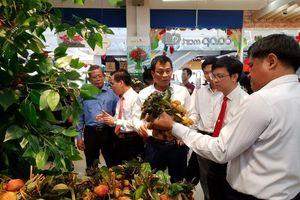 500 tấn vải thiều Lục Ngạn được Saigon Co.op cam kết tiêu thụ