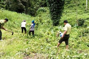 Tuyên Quang: Lâm Bình tích cực triển khai kế hoạch trồng rừng
