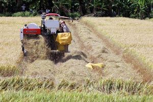 Đầu tuần, giá lúa gạo và cao su cùng giảm mạnh