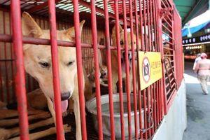 Hàn Quốc: Đóng cửa chợ thịt chó lớn ở Busan