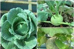 Sân thượng 30m2 xanh mát đủ loại rau quả, hoa và gà sạch của mẹ hai con ở quận 12, TP HCM