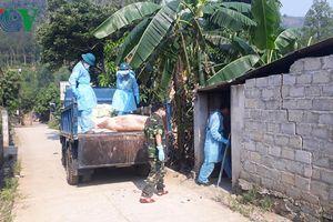 Lào Cai hỗ trợ cho các hộ chăn nuôi lợn bị mắc dịch tả châu Phi