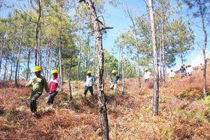 Thu hồi hàng loạt dự án liên quan đến rừng và đất lâm nghiệp
