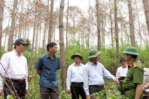 Tình trạng 'hạ độc' cây rừng diễn biến phức tạp