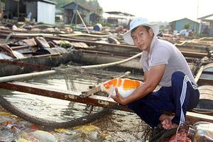 'Ngư phủ' bảnh trai nuôi hàng tấn cá 'quý tộc' ở sông Đồng Nai