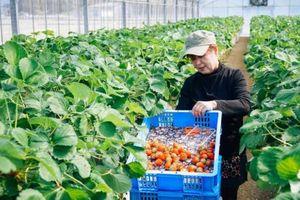 Nhật Bản đặt mục tiêu 9 tỷ USD xuất khẩu nông-thủy sản trong năm 2019