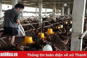 Huyện Như Xuân phát triển chăn nuôi theo hướng trang trại