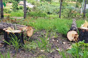 Lâm Đồng xử lý trách nhiệm người đứng đầu khi để xảy ra phá rừng