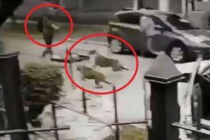 Clip: Thấy chủ bị tấn công, chó cưng 'xử đẹp' 2 tên cướp có súng