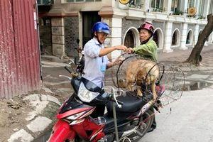 Phường Dịch Vọng Hậu tăng cường xử lý chó thả rông