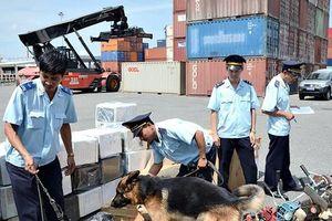 Hải quan Hải phòng phối hợp bắt ma túy đá