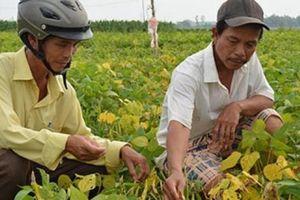 Quảng Nam: Huyện Đại Lộc đột phá về hạ tầng, làm mô hình sản xuất