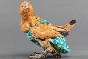 Sản xuất bỉm cho gà và chim: Nghề lạ kiếm tỷ đồng cho người tỉ mỉ