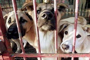 Khu chợ lớn chuyên bán thịt chó tại Hàn Quốc chính thức đóng cửa