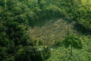 Phá rừng Amazon đang ở mức 'siêu tốc'