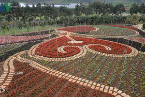 Mộc Châu, Sơn La phát triển mạnh mô hình hoa, rau an toàn