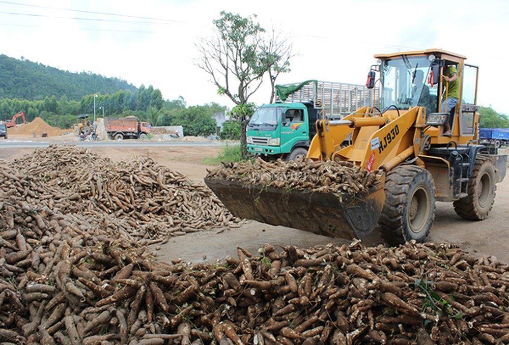 Xuất khẩu sắn lao đao vì Trung Quốc siết chặt nhập khẩu