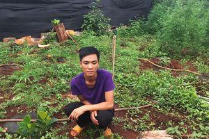 Phát hiện hàng trăm cây cần sa trồng trong làng