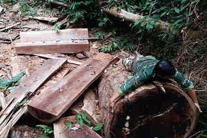 Kon Tum: Vụ triệt hạ gần 40 gốc cây cổ thụ ở Đắk Tô có nguy cơ bị 'chìm xuồng'?