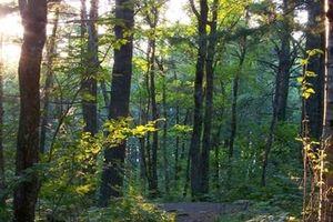 Canada đầu tư hơn 11 triệu USD xây dựng di sản thiên nhiên từ cây xanh