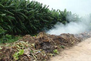 Những tác động của ô nhiễm không khí đối với động thực vật