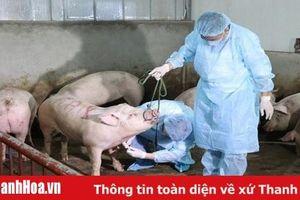 Tiếp tục tăng cường công tác phòng, chống bệnh dịch tả lợn Châu Phi trên địa bàn tỉnh