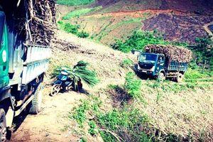 Gian lận thương mại từ Thái Lan đang xóa sổ ngành mía đường Việt Nam