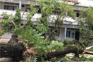 Phòng chống mưa lốc trong trường học