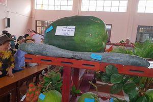 Hội chợ Nông nghiệp và sản phẩm OCOP khu vực Đồng bằng sông Cửu Long 2019