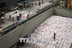 Giá gạo Ấn Độ và Thái Lan tăng do đồng nội tệ mạnh lên