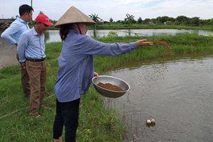Thái Bình: Cô giáo 9X rời bục giảng nuôi tôm trúng nhờ... tỏi