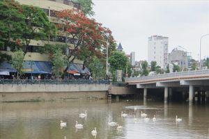 Gấp rút hoàn thành nhà nổi cho đàn thiên nga sông Tam Bạc